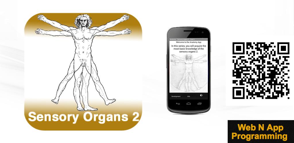 Anatomie - Sinnesorgane 2