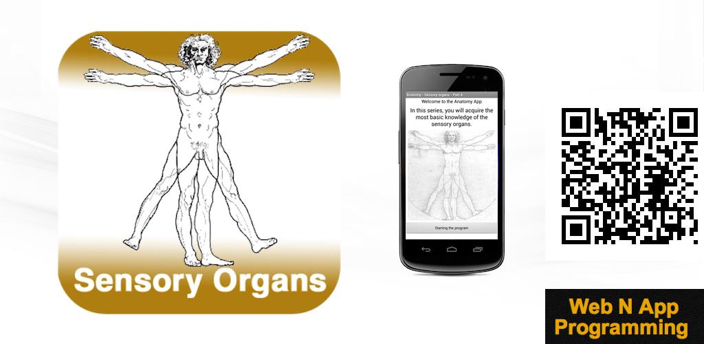 Anatomie - Sinnesorgane