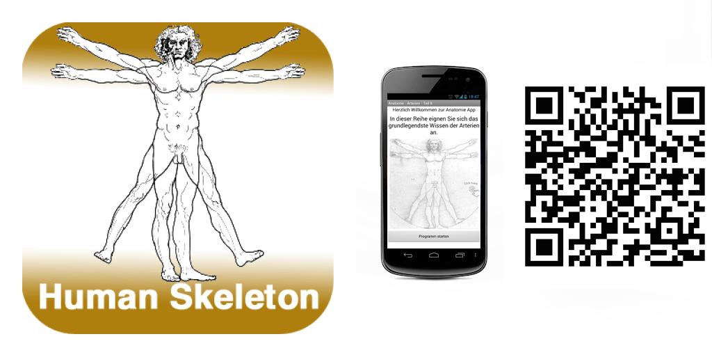 Anatomie - Skelett